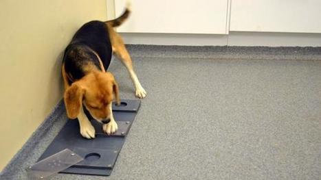 La razón por la que los perros se llevan tan bien con nosotros | AVATCOR | Scoop.it