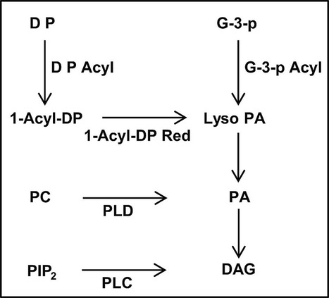 Regulation of Cellular Diacylglycerol through Lipid Phosphate Phosphatases Is Required for Pathogenesis of the Rice Blast Fungus, Magnaporthe oryzae | Rice Blast | Scoop.it