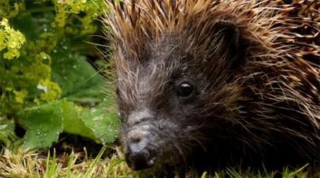 Scotland's City Safari - Documentary | DUNDEE & SCOTLAND RESOURCES | Scoop.it