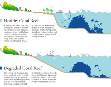 The Coral Reef Crisis Threatens Nature's Ability To Help Us Deal With Climate Change | OUR OCEANS NEED US | Scoop.it
