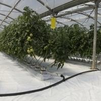 Hydroponic Gardening | Berkeley Wellness | Vertical Farm - Food Factory | Scoop.it