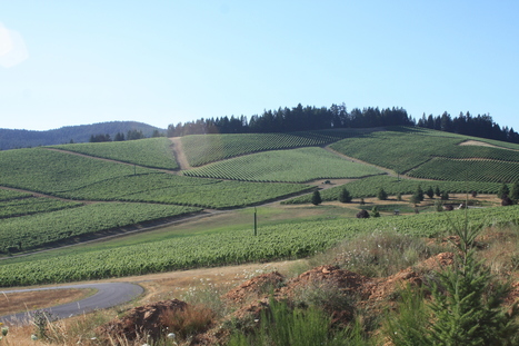 What Ontario Wineries Can Learn From Oregon | culture | Torontoist | Pinot Post | Scoop.it