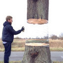Un street artist fait flotter un arbre : golem13 | Street Art Nancy | Scoop.it