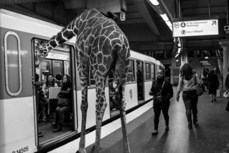 Wild Animals Stuck in Subway | Grand Pictures | Scoop.it