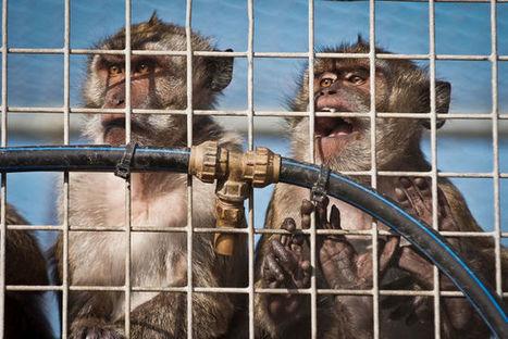 Piden el fomento de métodos alternativos a la experimentación con animales | Agua | Scoop.it