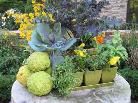 Fall crops in pots a feast for the senses | Container Gardening | Scoop.it