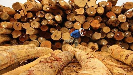 Malaysia's indigenous hit hard by deforestation | Sustainable Forestry | Scoop.it
