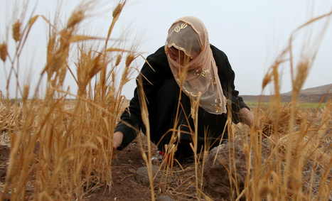 The Arab World's Looming Crisis: The Rapidly Rising Cost of Food | Food Security | Scoop.it