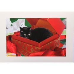 Cat Ornaments Tell A Story | Christmas Cat Ornaments and Cards | Scoop.it