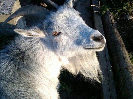 Hootenanny's silence | Nature Animals humankind | Scoop.it