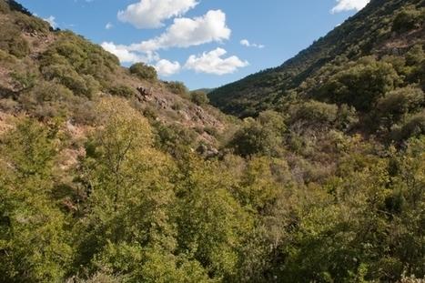 Adaptation des forêts méditerranéennes aux changements climatiques | Les colocs du jardin | Scoop.it