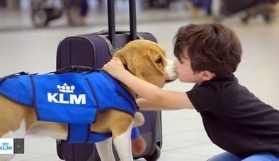Trovatona di KLM: il cane trova oggetti smarriti - colpo di PR e visibilità su YouTube   Digital Transformation   Scoop.it