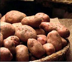 La patata rossa di Colfiorito diventa Igp | Umbria & Italy | Scoop.it
