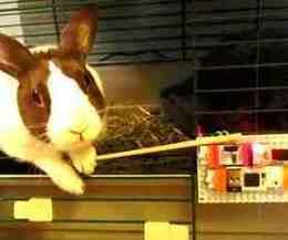 Emailing Bunny | Open Source Hardware News | Scoop.it