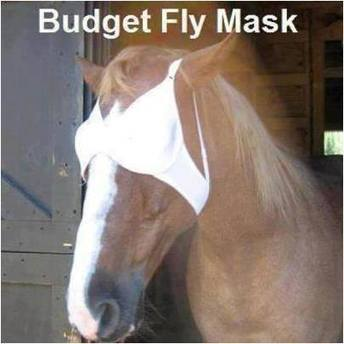 Budget fly mask | Equestrian Humor | Scoop.it