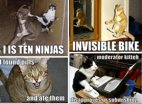 Pourquoi les mèmes ne sont pas des mèmes | Les Internets | Culture Memes | Scoop.it