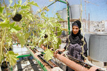 Rooftop gardens project aims to reduce refugees' dependence on aid | Eco-friendly roofs:  green, white, and garden | Scoop.it