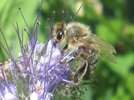 Et si nous imitions les abeilles? - OuiShare | Nouveaux paradigmes | Scoop.it