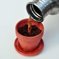 Da una matita può nascere un fiore   Fuga dal benessere   Scoop.it