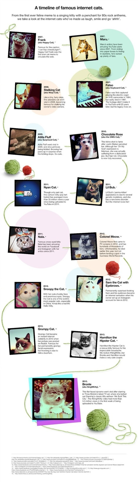 Famous Cats on the Internet {Infographic} - Best Infographics | Digital-News on Scoop.it today | Scoop.it