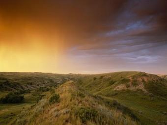 Informational Website: Temperate Grasslands | Temperate Grassland | Scoop.it