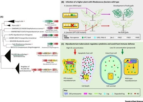 LONELY-GUY Knocks Every Door: Crosskingdom Microbial Pathogenesis | PlantBioInnovation | Scoop.it
