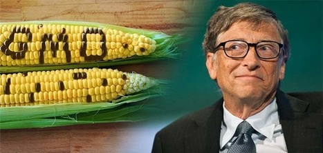 Is Bill Gates Right About GMOs? | Farming, Forests, Water, Fishing and Environment | Scoop.it