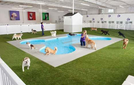 NY's JFK Airport Will Soon Have a Luxury Animal Terminal | enjoy yourself | Scoop.it