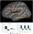Growth of language-related brain areas after foreign language learning | ADQUISICIÓN DE SEGUNDAS LENGUAS-SECOND LANGUAGE ADQUISITION | Scoop.it