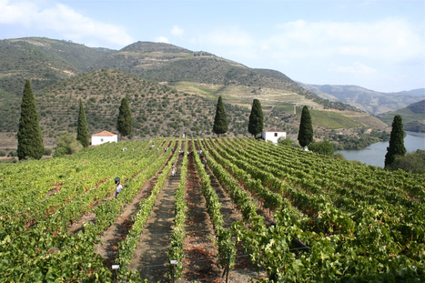 2011 Vintage Ports declared by Symington Family Estates | The Douro Index | Scoop.it
