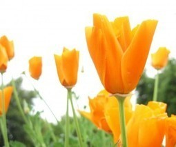 Sikkim to explore Business Opportunity in Floriculture | Floriculture in India | Scoop.it