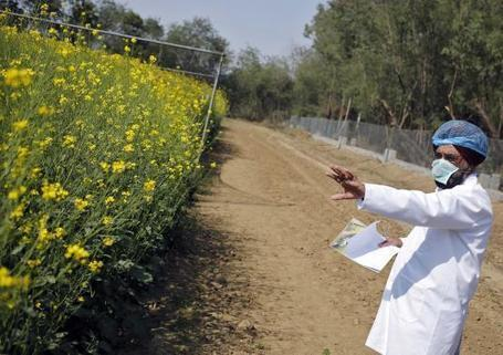Modi bets on GM crops for India's second green revolution | Haak's APHG | Scoop.it