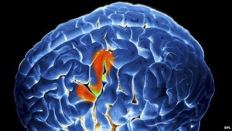 The difficult task of reading the brain | Your Brain and You | Scoop.it