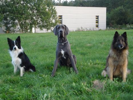 Qu'est ce que l'ethologie ?  Tous les articles education du chien - propreté - comportement - sociabilité -letoilesdesbergers.com | Educateur canin en Alsace - Etoile des bergers | Scoop.it