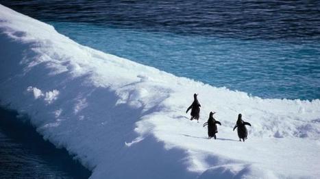 La Russie bloque la création d'aires marines protégées en Antarctique - Francetv info | Hurtigruten Arctique Antarctique | Scoop.it