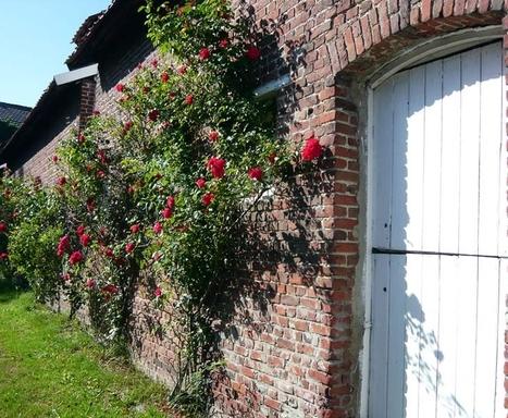Trois solutions pour couvrir un mur végétal | Immobilier | Scoop.it