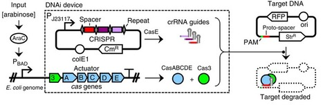 Targeted DNA degradation using a CRISPR device stably carried in the host genome | Plants&Bacteria | Scoop.it