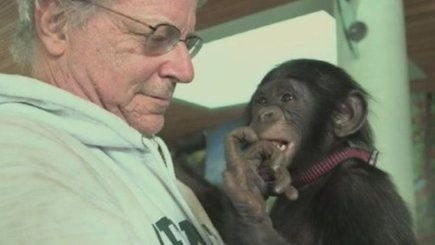 Does a chimpanzee deserve human rights? | Revelation | Scoop.it