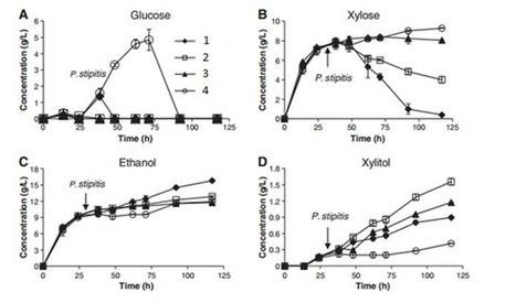 Optimización del proceso de obtención de bioetanol a partir de la paja del arroz. | Microbiología Industrial | Scoop.it