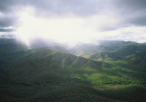 Rainforests - Wet Tropics World Heritage Area | Rainforests - Global environments | Scoop.it