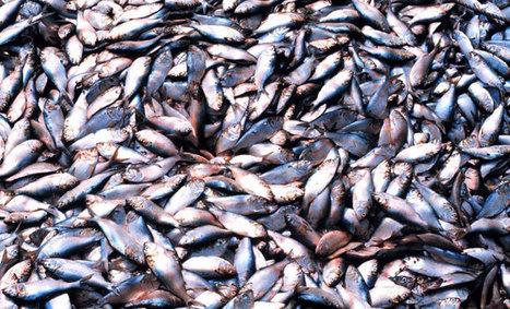 Les stocks de poissons sont en forte chute en Méditerranée   Solidarité, mécénat, développement et actu géné   Scoop.it
