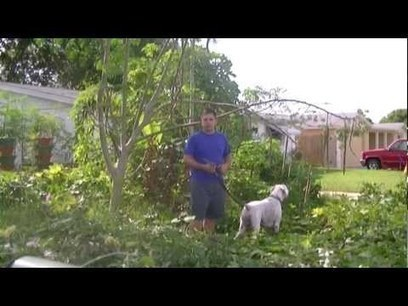 Holiday Oasis Garden: Florida Permaculture Suburban Homestead | Eco-Food Innovation | Scoop.it