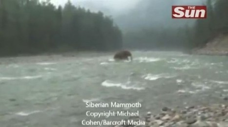 Real or Fake? 'Woolly Mammoth' Spotted Crossing Siberian River | e-Expeditions | Scoop.it