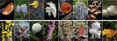 Tales and mysteries of fungal fruiting: How morphological and physiological traits affect a pileate lifestyle | Plant Gene Seeker -PGS | Scoop.it