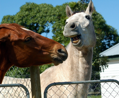 Horse lovers mount a full-scale Facebook protest | Barn Chatter | Scoop.it