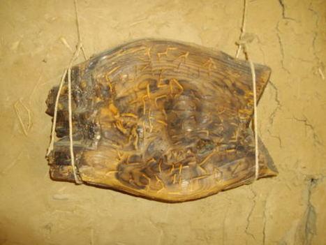 Una tablilla encontrada en Dispilio, Grecia, pone en cuestión la historia de la escritura – Arqueología, Historia Antigua y Medieval - Terrae Antiqvae   Ollarios   Scoop.it