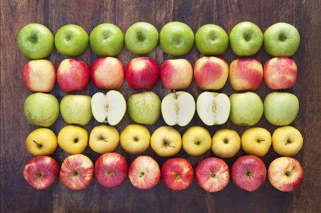 USDAJust Approved Apples That Don't Turn Brown   Genetic engineering and Human genetics, background reading and resources for IB   Scoop.it