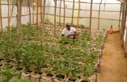 Nigeria: 2 millions d'agriculteurs bénéficieront des produits de la Saro Agroscience | Questions de développement ... | Scoop.it