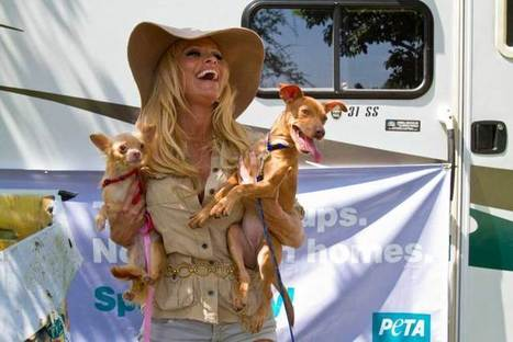 PETA Takes Heat over Claims it Killed 90% of Animals Dropped off at Virginia Shelter   TIME.com   Politics and Business   Scoop.it