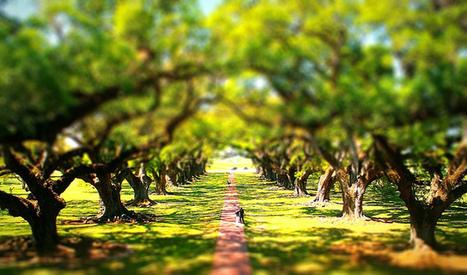 Oak Alley Plantation -tiltshift | Oak Alley Plantation: Things to see! | Scoop.it